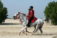 /Bahrain/visit/gallery/Stable/thumbnails/IMG_3082.jpg