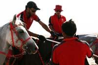 /Bahrain/visit/gallery/Stable/thumbnails/IMG_3223.jpg