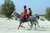 /Bahrain/visit/gallery/Stable/thumbnails/IMG_3383.jpg