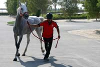 /Bahrain/visit/gallery/Stable/thumbnails/IMG_3460.jpg