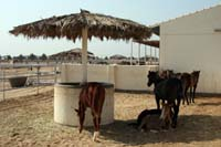 /Bahrain/visit/gallery/Stable/thumbnails/IMG_3514.jpg