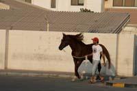 /Bahrain/visit/gallery/Tourists_Steph/thumbnails/IMG_2826.jpg