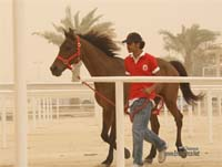 /international/Bahrain/2008CrownPrinceCup/gallery/thumbnails/OSM31102.jpg