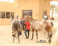 /international/Bahrain/2008CrownPrinceCup/gallery/thumbnails/OSM31131.jpg