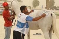 /international/Bahrain/2008CrownPrinceCup/gallery/thumbnails/OSM31155.jpg