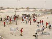 /international/Bahrain/2008CrownPrinceCup/gallery/thumbnails/OSM31174.jpg