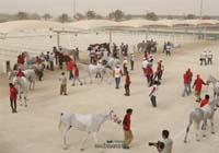 /international/Bahrain/2008CrownPrinceCup/gallery/thumbnails/OSM31175.jpg