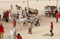 /international/Bahrain/2008CrownPrinceCup/gallery/thumbnails/OSM31178.jpg