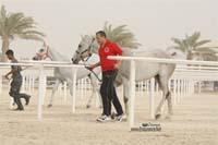 /international/Bahrain/2008CrownPrinceCup/gallery/thumbnails/OSM31209.jpg