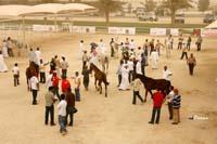/international/Bahrain/2008HMTheKingsEnduranceCup/Gallery/VetIn/thumbnails/_SAM4347.jpg