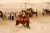 /international/Bahrain/2008HMTheKingsEnduranceCup/Gallery/VetIn/thumbnails/_SAM4349.jpg