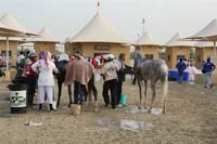 /international/Bahrain/2008HMTheKingsEnduranceCup/Gallery/theRide/thumbnails/OSM33756.jpg