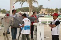 /international/Bahrain/2008HMTheKingsEnduranceCup/Gallery/theRide/thumbnails/OSM33784.jpg