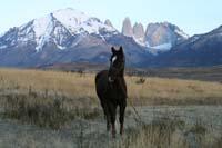 /international/Chile/2009TorresDelPaine/gallery/may2_morning/thumbnails/IMG_5438.jpg