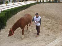 /international/Spain/2009AlAndalus/gallery/m26gallery/thumbnails/0903TDAA_052.BJPG.jpg