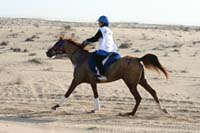 /international/UAE/2008AlNayhanLadiesChallenge/Gallery/ride_day/thumbnails/IMG_7025.jpg