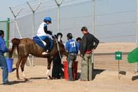 /international/UAE/2008AlNayhanLadiesChallenge/Gallery/ride_day/thumbnails/IMG_7228.jpg