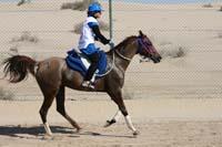 /international/UAE/2008AlNayhanLadiesChallenge/Gallery/ride_day/thumbnails/IMG_7240.jpg