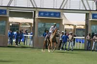 /international/UAE/2008DubaiWorldChallenge/Gallery/best/thumbnails/IMG_9837.jpg