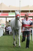 /international/UAE/2009PresidentsCup/gallery/03Fri/thumbnails/0902PCup_108.jpg