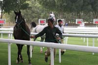 /international/UAE/2009PresidentsCup/gallery/03Fri/thumbnails/0902PCup_130.jpg