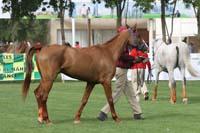 /international/UAE/2009PresidentsCup/gallery/03Fri/thumbnails/0902PCup_137.jpg