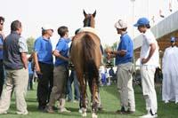 /international/UAE/2009PresidentsCup/gallery/03Fri/thumbnails/0902PCup_140.jpg