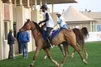 /international/UAE/2009PresidentsCup/gallery/04Sat/thumbnails/0902PCup_210.jpg