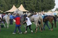/international/UAE/2009PresidentsCup/gallery/04Sat/thumbnails/0902PCup_251.jpg