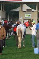 /international/UAE/2009PresidentsCup/gallery/04Sat/thumbnails/0902PCup_254.jpg