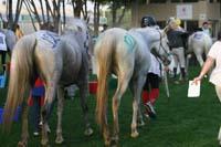 /international/UAE/2009PresidentsCup/gallery/04Sat/thumbnails/0902PCup_259.jpg