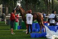 /international/UAE/2009PresidentsCup/gallery/04Sat/thumbnails/0902PCup_266.jpg