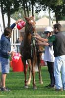 /international/UAE/2009PresidentsCup/gallery/04Sat/thumbnails/0902PCup_304.jpg