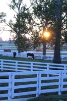 /international/USA/2009KentuckyHorsePark/gallery/01/thumbnails/0910KYC_0051.jpg