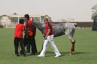 international/Bahrain/2009GrandPrix/gallery/04/thumbnails/0902UAE_681.jpg