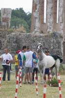 international/Italy/2008Gubbio/gallery/07VetIn/thumbnails/0806GUB_064.jpg