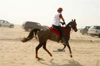 international/Kuwait/2009ShkNasserCup/gallery/Osama/thumbnails/USAM9648.jpg