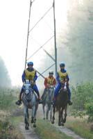 international/Poland/2008Warka/gallery/thumbnails/horses_an_the_rout_2.jpg