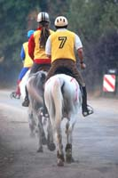 international/Poland/2008Warka/gallery/thumbnails/horses_on_the_rout160km.jpg