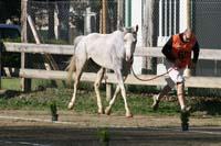international/Spain/2008Figarol/gallery/02Loop1B/thumbnails/08FIG_150.jpg