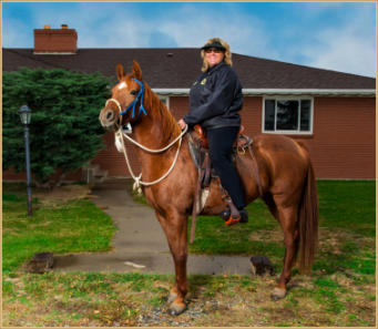 Kenlyn Arabians endurance and breeding